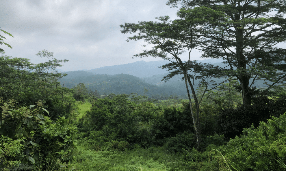 mooiste treinreis in Sri Lanka - Van Kandy naar Ella