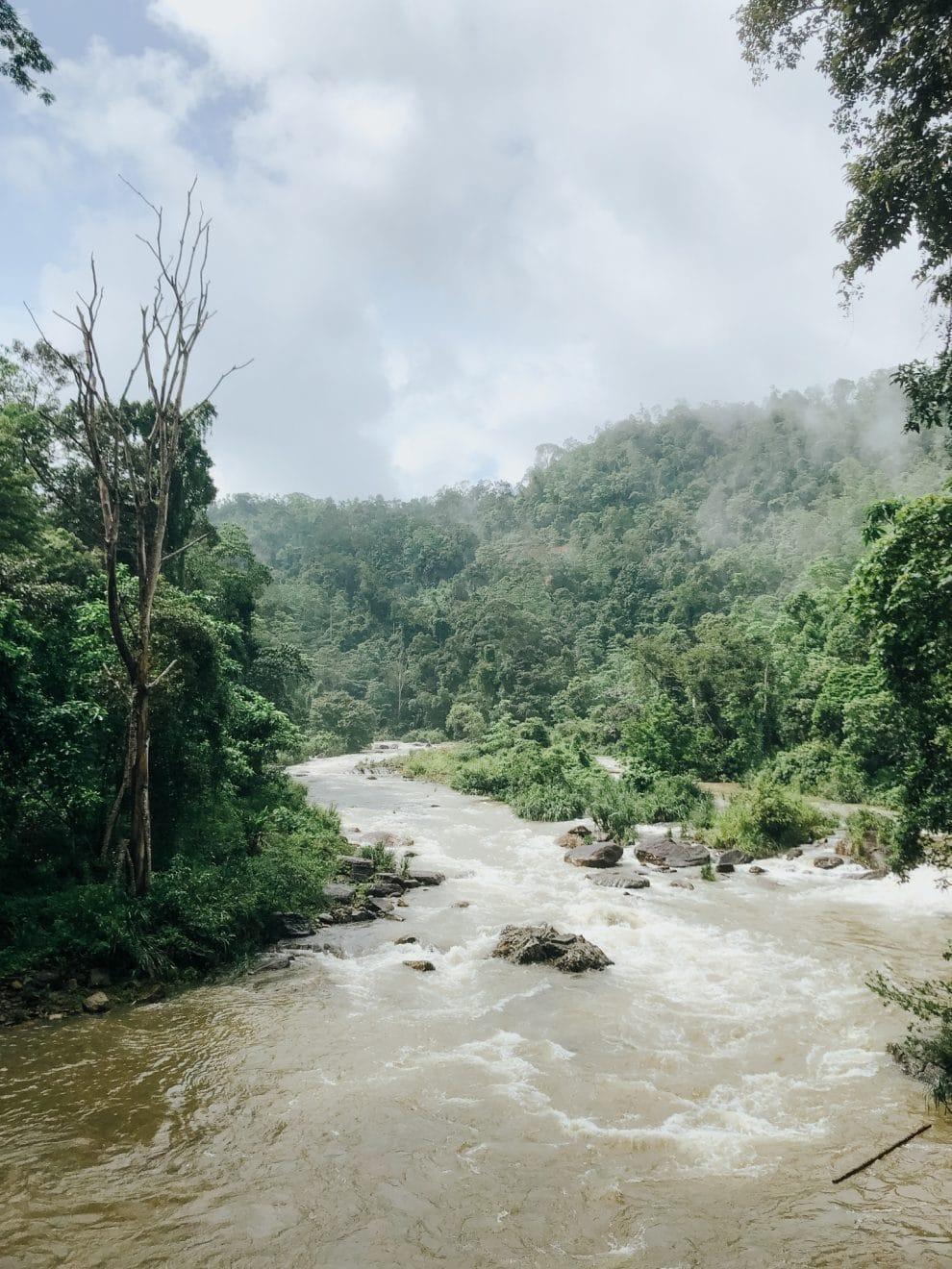 Sinharaja Forest regenwoud Sri Lanka